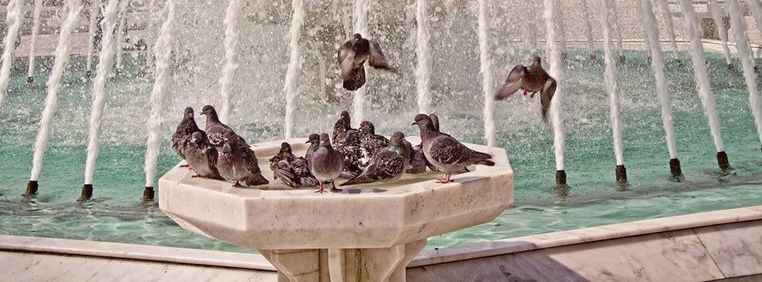 Do Solar Powered Bird Baths Work
