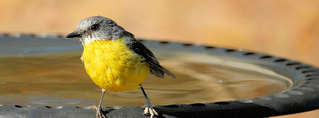 How to Select and Set Up a Bird Bath